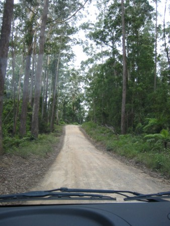 Logging Track beyond Dorrigo