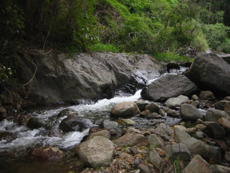 Mt Warning's Rocky River