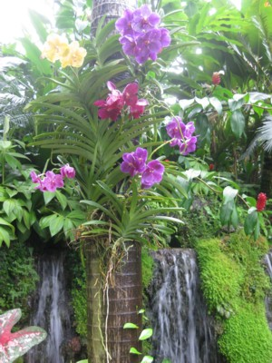 Singapore Botanic Gardens - Assorted Colours of Orchid