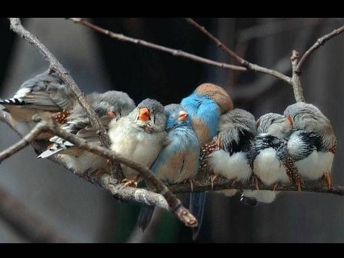Bird Huddle