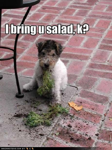 Doggie Salad
