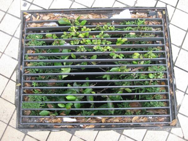 Foliage Filled Pavement Drain