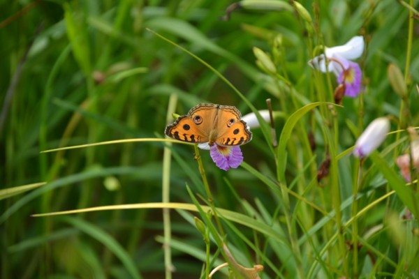 Butterfly on Small Orchid