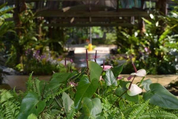 Kuala Lumpur's Orchid Garden