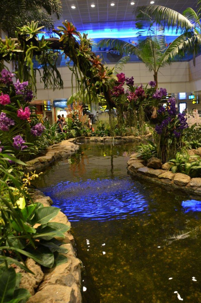 Singapore Airport Orchids